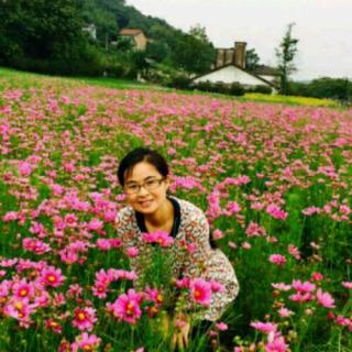 浙江衢州江山云中蔷薇